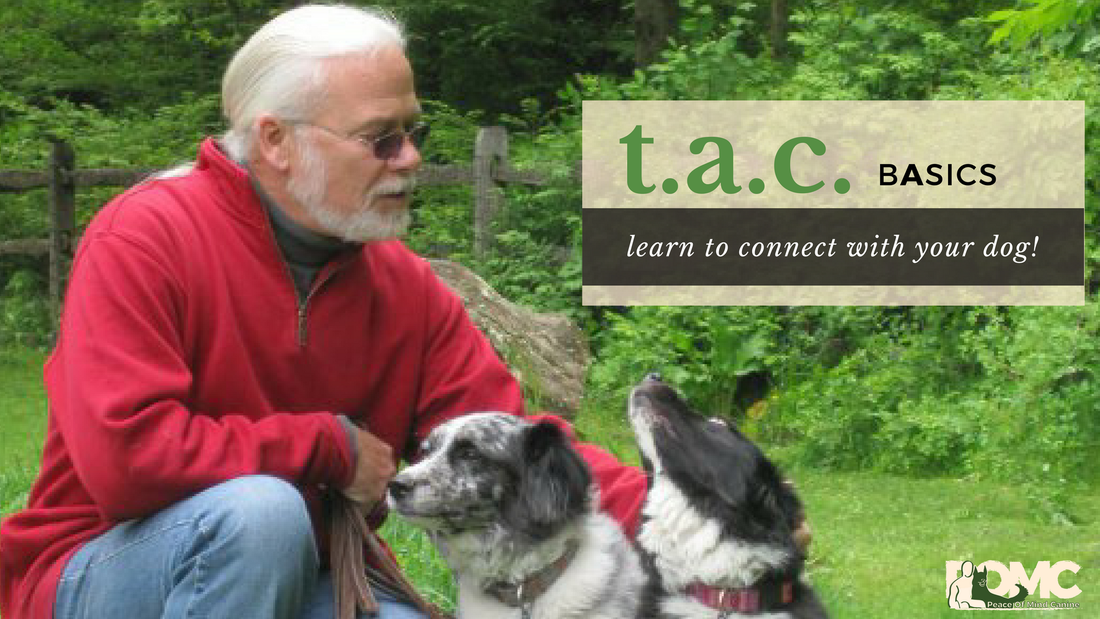 PicturePeace of Mind Canine LLC - Dog Training CT - Jack Crann - The Affection Connection